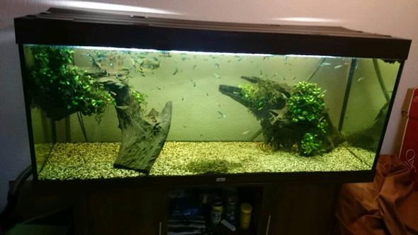 Was haltet ihr von diesen Aquarium, soll für einen Hamster sein?