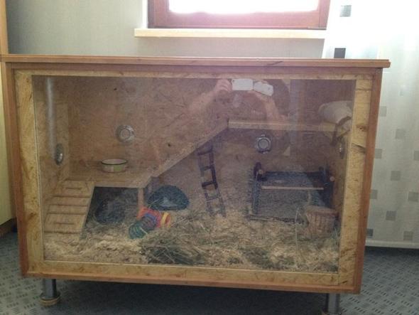 bild1 - (Tipps, Hamster, Terrarium)