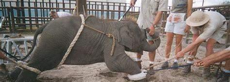Was haltet ihr von Zoos/Zirkussen?