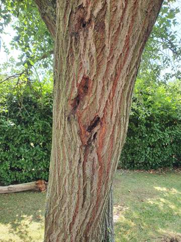 Was hat der Baum?