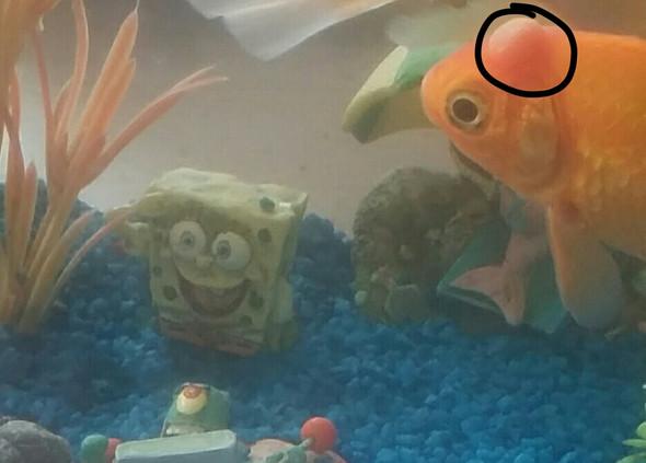 Beule kopf am hat fisch Goldfisch hat