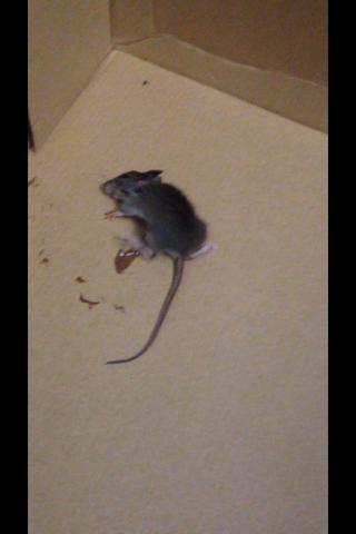 Was hat die Maus?