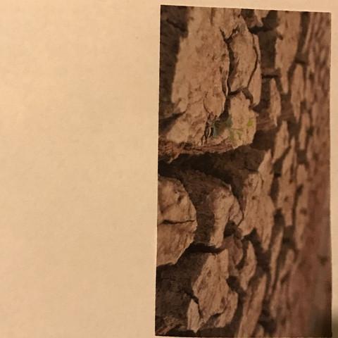 Bodentrockenheit - (Landwirtschaft, Bodentrocknung)