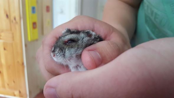 Hier ist das genante Problem - (Tiere, Hamster, Tierarzt)