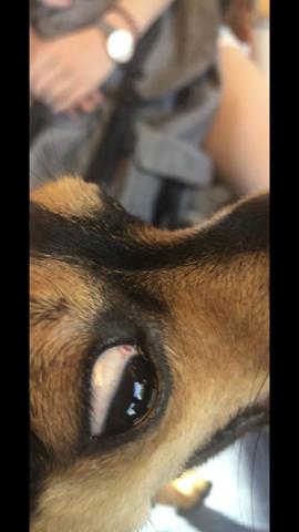 - (Gesundheit und Medizin, Tiere, Hund)