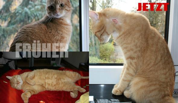 Früher und jetzt - (Tiere, Krankheit, Katze)