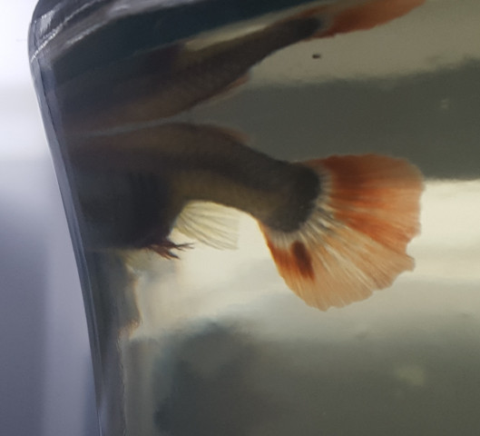 123 - (Krankheit, Fische, Aquarium)