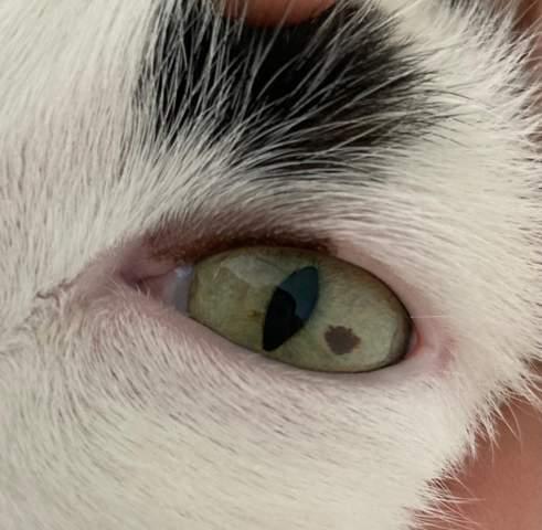 Was hat meine Katze da im Auge? Könnte es gefährlich sein?