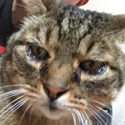 Berühmt Was hat meine Katze für eine Krankheit/Augen? @IR_25