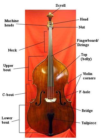 was hei t ist c bout upper bout violin corners beim kontrabass hilfe musik. Black Bedroom Furniture Sets. Home Design Ideas