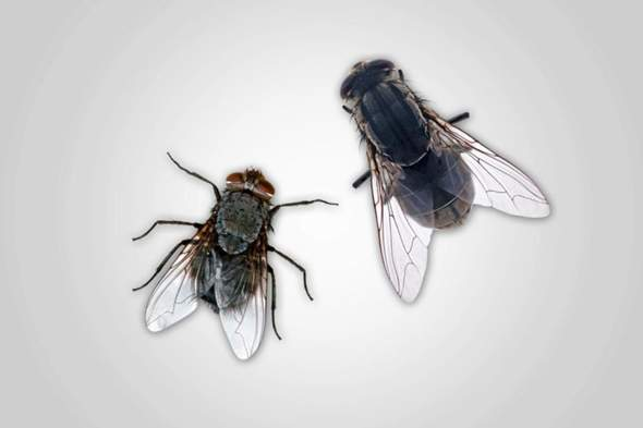 Was hilft am besten gegen Fliegen?