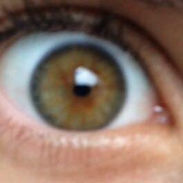 Das Auge: - (Menschen, Augenfarbe, welches)
