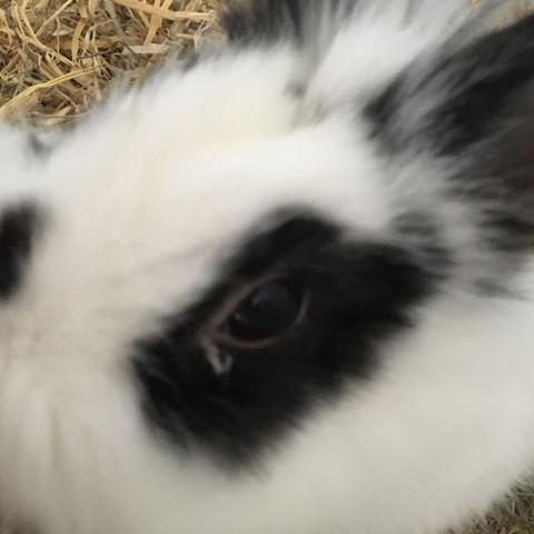 Da sieht man diesen komischen weissen faden - (Augen, Kaninchen, Hasen)