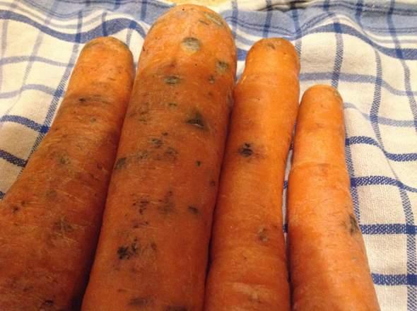 Was ist das an den Karotten und kann ich das meinen Kaninchen geben?