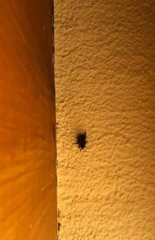 Was ist das auf meinem Balkon? Bienennest?