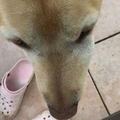 Rechts unterm Auge  - (Hund, Haustiere)