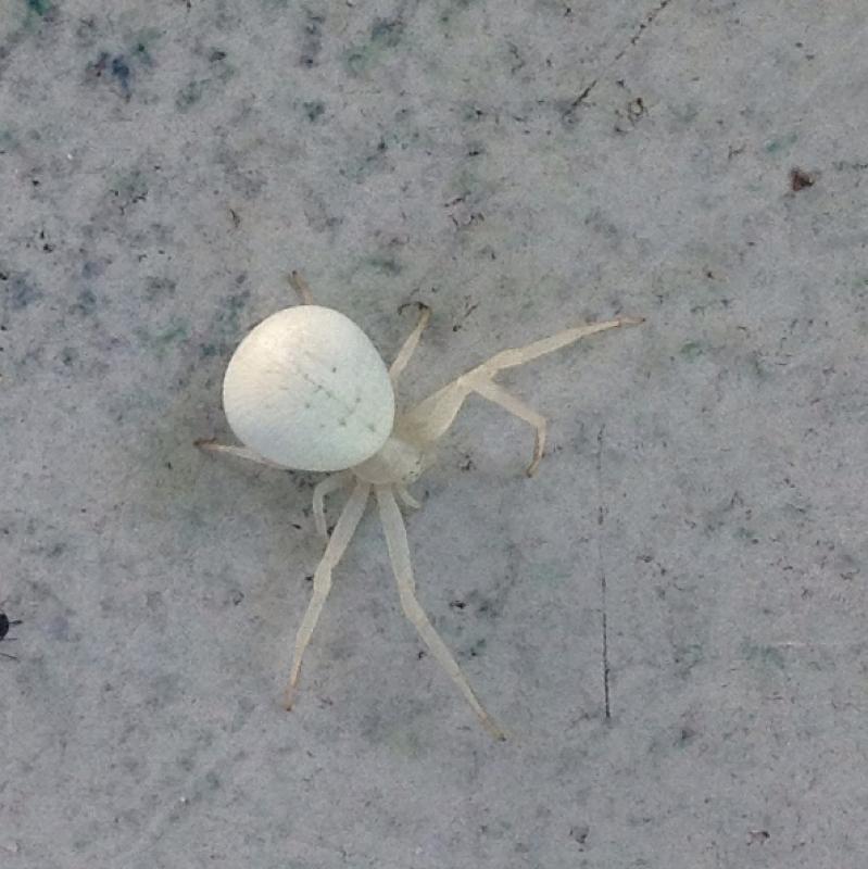 Spinnen Im Garten: Was Ist Das Bloß Für Eine Spinne? (Tiere, Garten, Natur