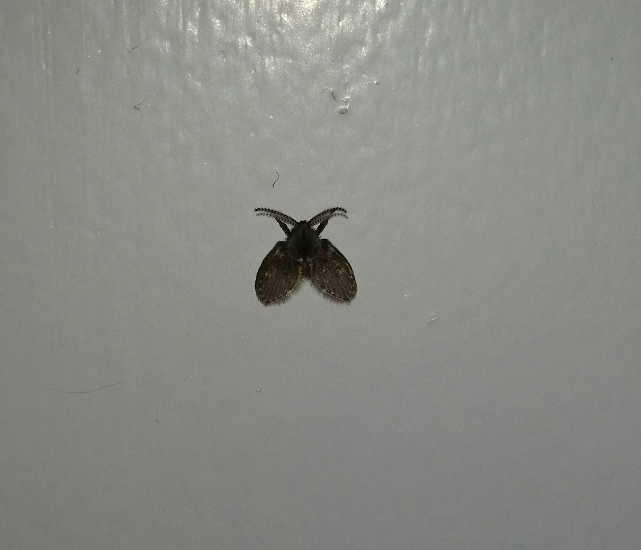 was ist das denn f r ein tier insekten motten tier hilfe. Black Bedroom Furniture Sets. Home Design Ideas