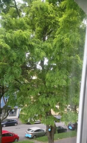 Was ist das für ein Baum?