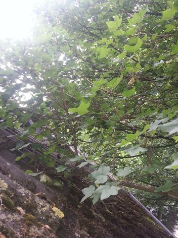 Baum - (Baum, Bestimmung)