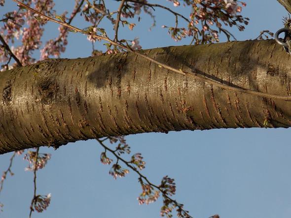 Was Ist Das Für Ein Baum was ist das für ein baum der da in meinem garten steht pflanzen