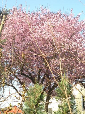 Baum1 - (Garten, Pflanzen, Baum)