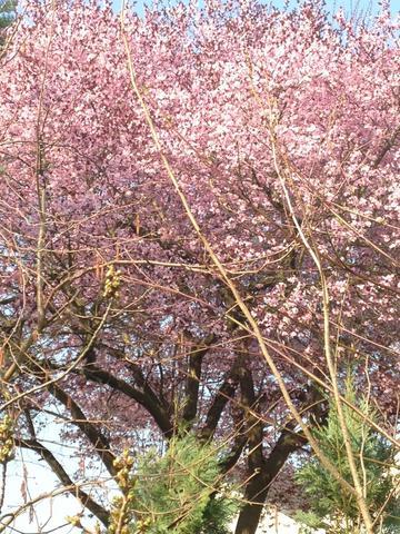 Baum2 - (Garten, Pflanzen, Baum)
