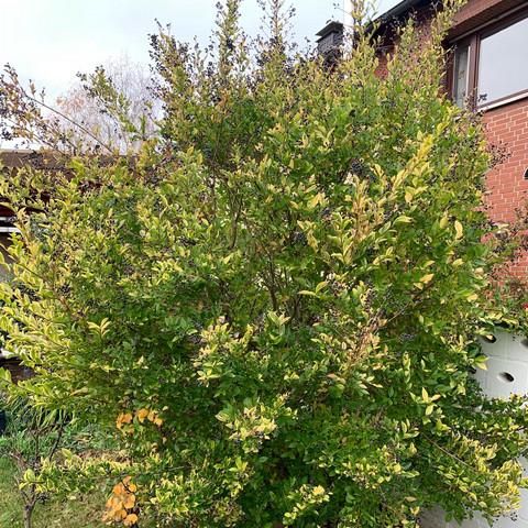 Fernperspektive - (Pflanzen, Garten, Baum)