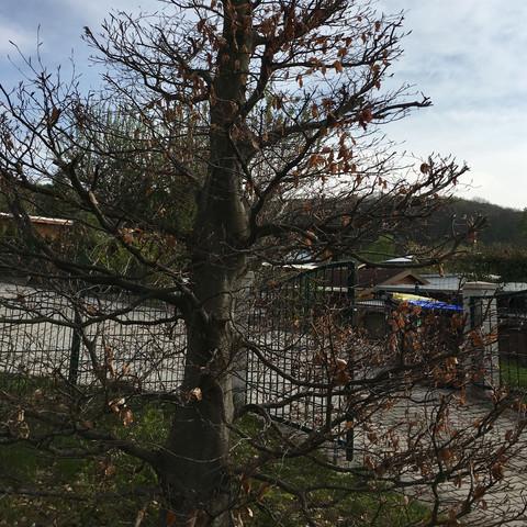 Was Ist Das Für Ein Baum was ist das für ein baum hilfe bioprojekt baumart biologie