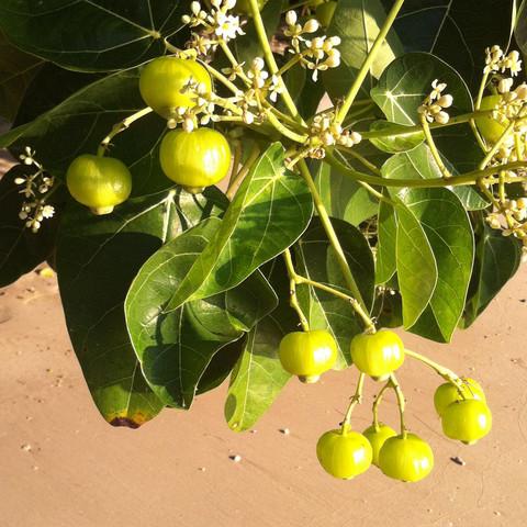 Was Ist Das Für Ein Baum was ist das für ein baum in botanik