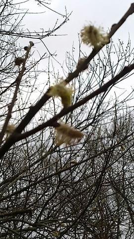 Was Ist Das Für Ein Baum was ist das für ein baum siehe blüte bluete baumbestimmung