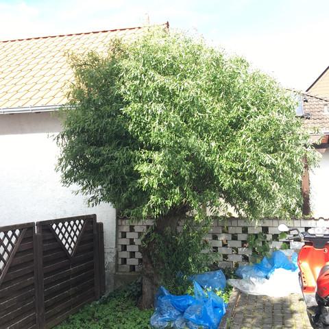 Was Ist Das Für Ein Baum was ist das für ein baum und ist der was wert biologie natur