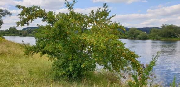 - (Pflanzen, Natur, Baum)