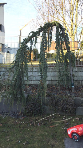 Unbekannter Baum - (Garten, Baum)