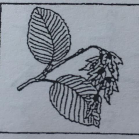 Was Ist Das Für Ein Baum was ist das für ein baum wie nennt ihn wald früchte blaetter