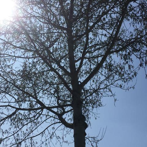 Was Ist Das Für Ein Baum was ist das für ein baum natur