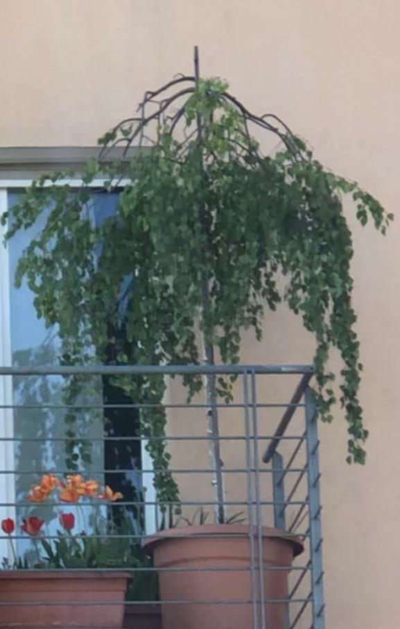 Was Ist Das Für Ein Baum : was ist das f r ein baum siehe bild pflanzen ~ Watch28wear.com Haus und Dekorationen