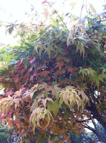 unbekannter Baum - (Garten, Pflanzen, Baum)