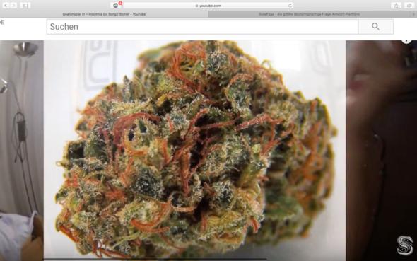Welche sorte ist das - (Cannabis, marihuana)