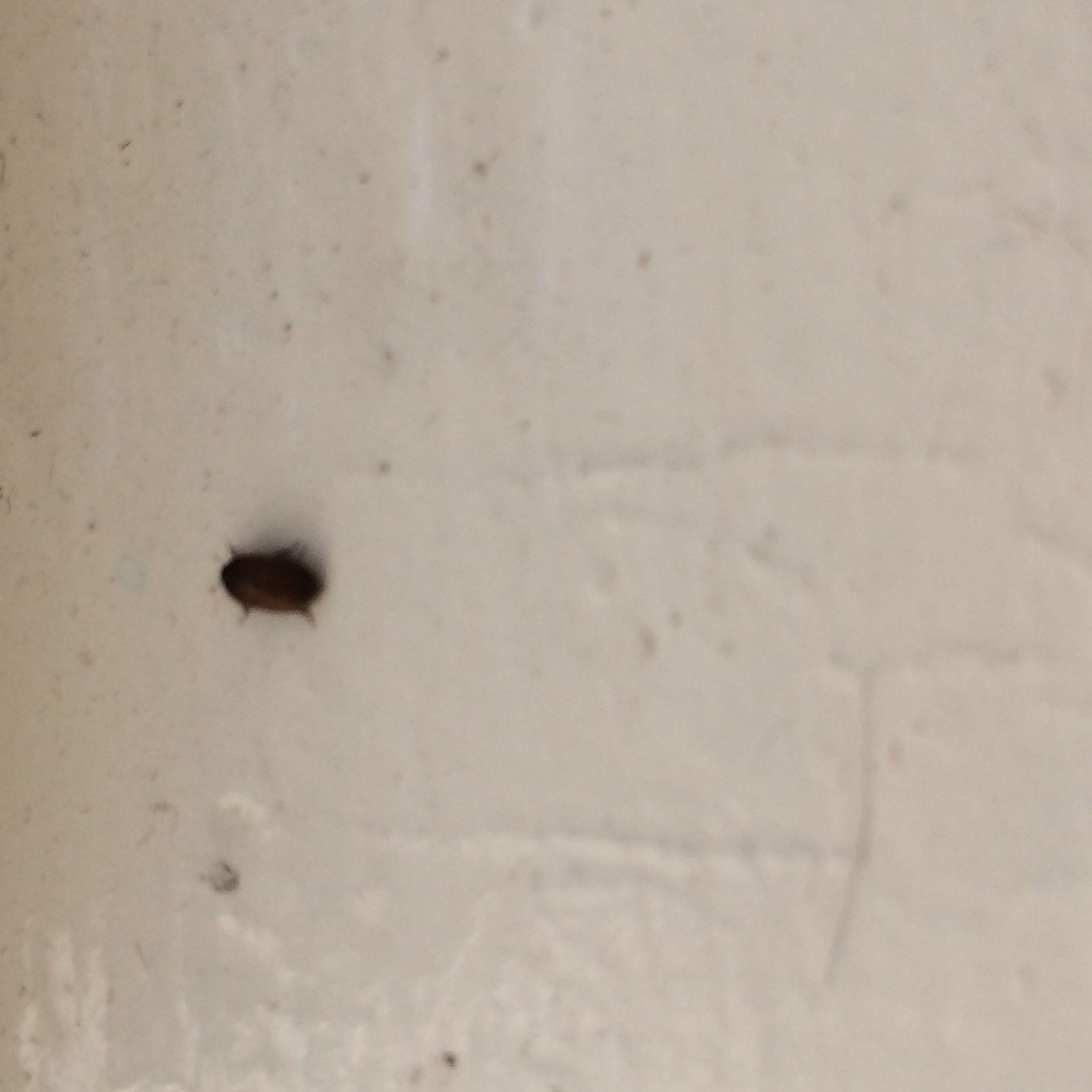 was ist das f r ein ekliges kleines insekt insekten ekelhaft kammerj ger. Black Bedroom Furniture Sets. Home Design Ideas