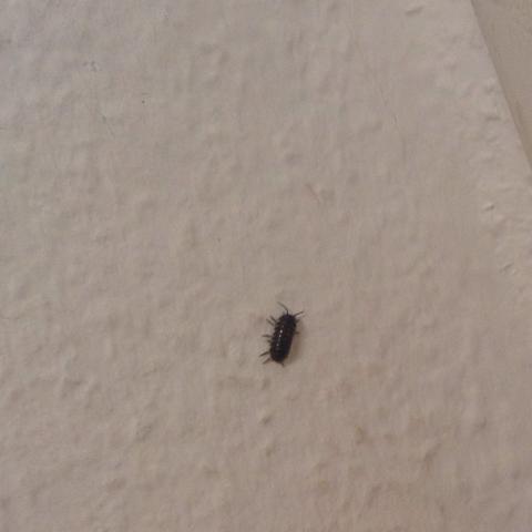 Gfdddd - (Tiere, Insekten, gefährlich)