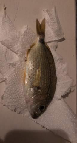 Was ist das für ein Fisch?