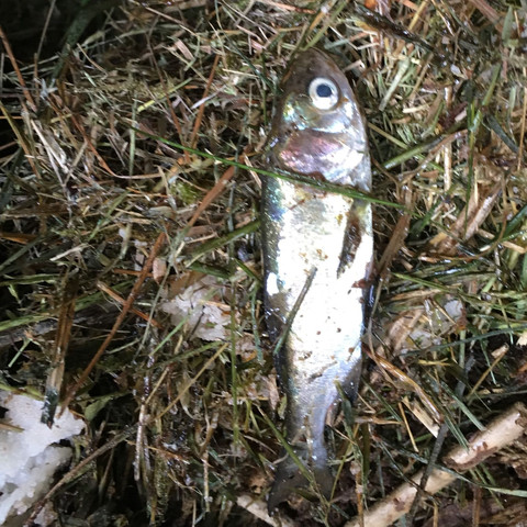 Was ist das f r ein fisch im teich gewesen fische for Fische algenfresser teich