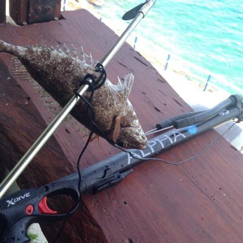 Was ist das für ein Fisch  - (angeln, Griechenland, Kreta)