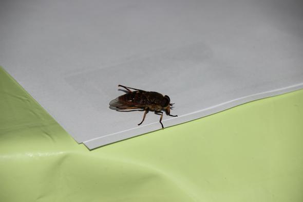 Oberseite ohne Glas - (groß, Bienen, Wespen)