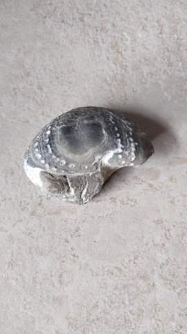 Was ist das für ein Fossil? Hat jemand eine Idee?