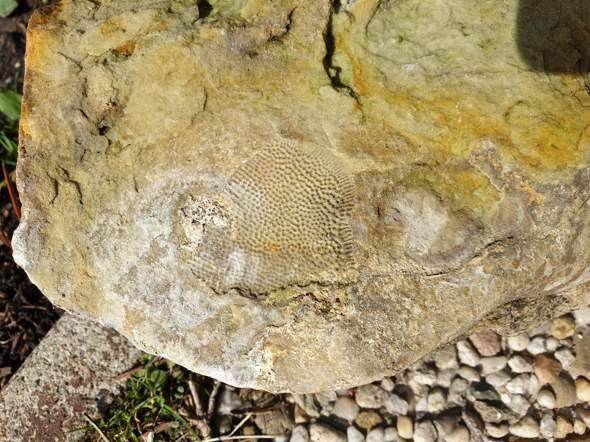 Was ist das für ein fossil in meinem Garten?