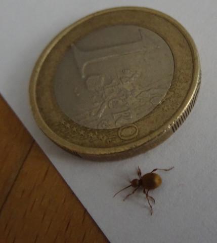 Käfer1 - (Insekten, Kaefer)