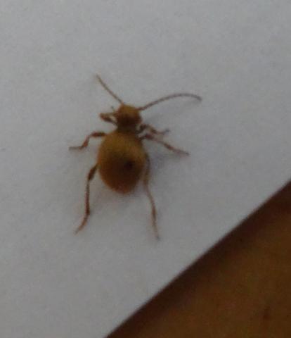 Käfer2 - (Insekten, Kaefer)