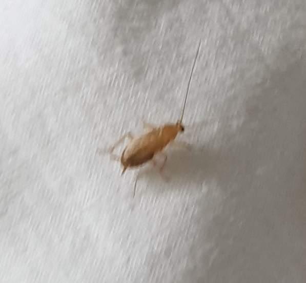 Insekten schabenähnliche Naturspaziergang: Käfer